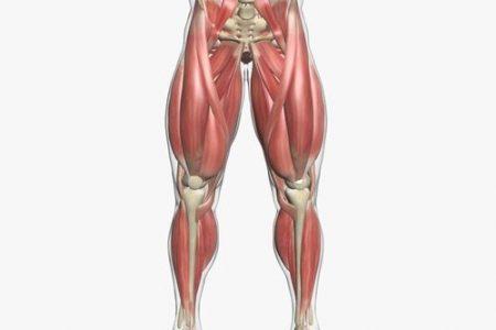 noge - ilustracija